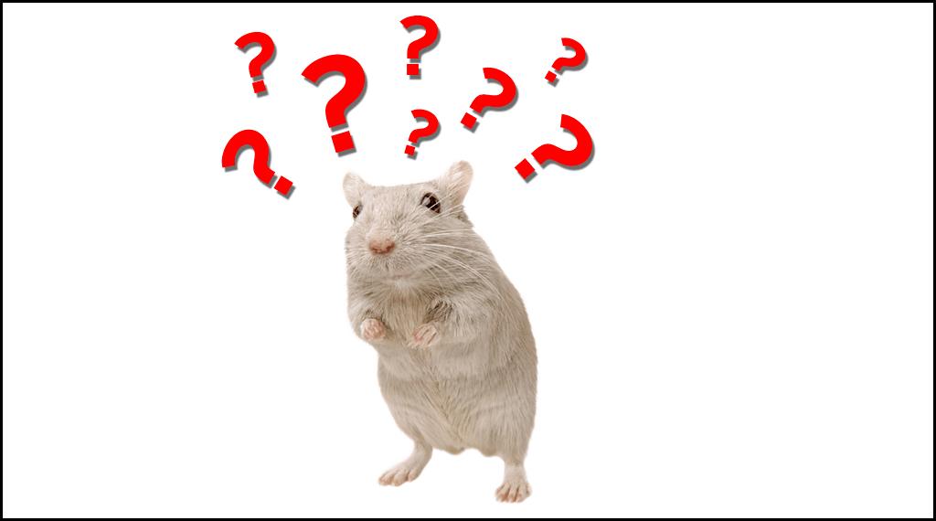 mice-studies-to-humans