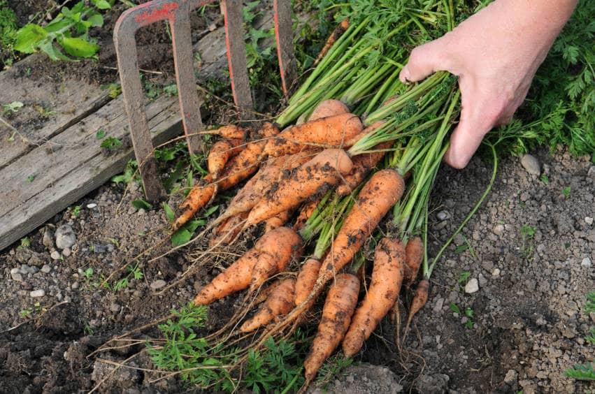 vegetable-soil-nutrients