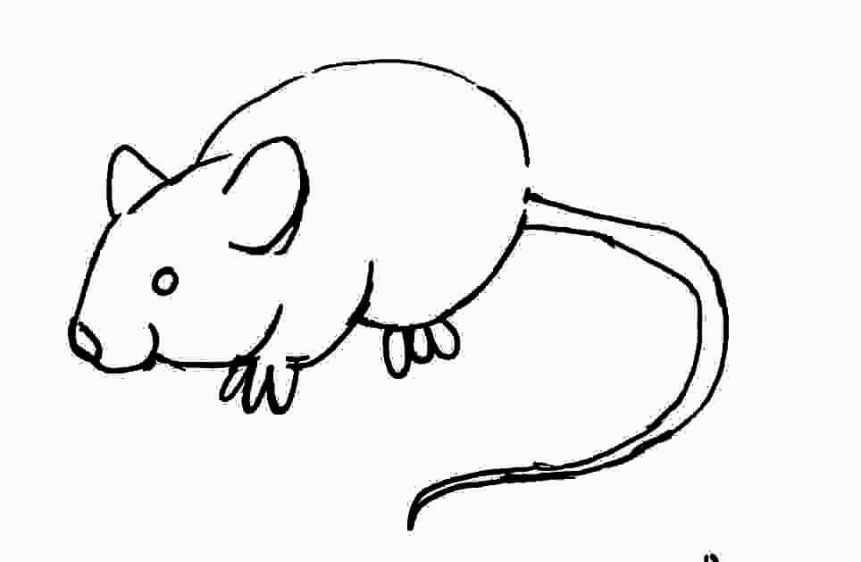 mouse-studies
