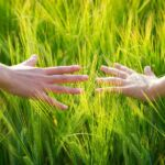 Hands in tall grass_1024x600.jpg
