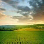 farm_small.jpg
