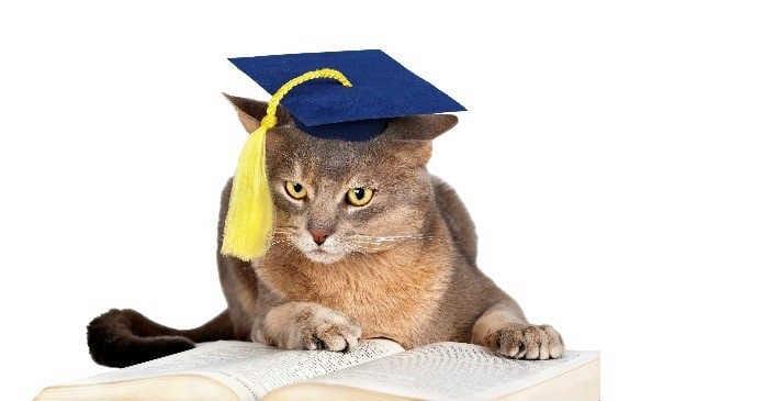 kitty-grad (1).jpg