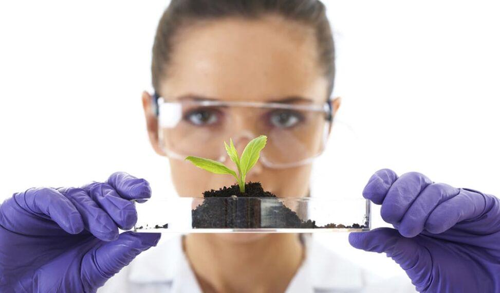 small-plant.jpg
