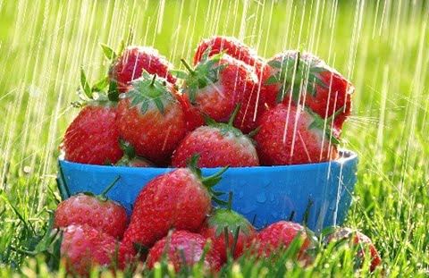 strawberries-and-rain.jpg