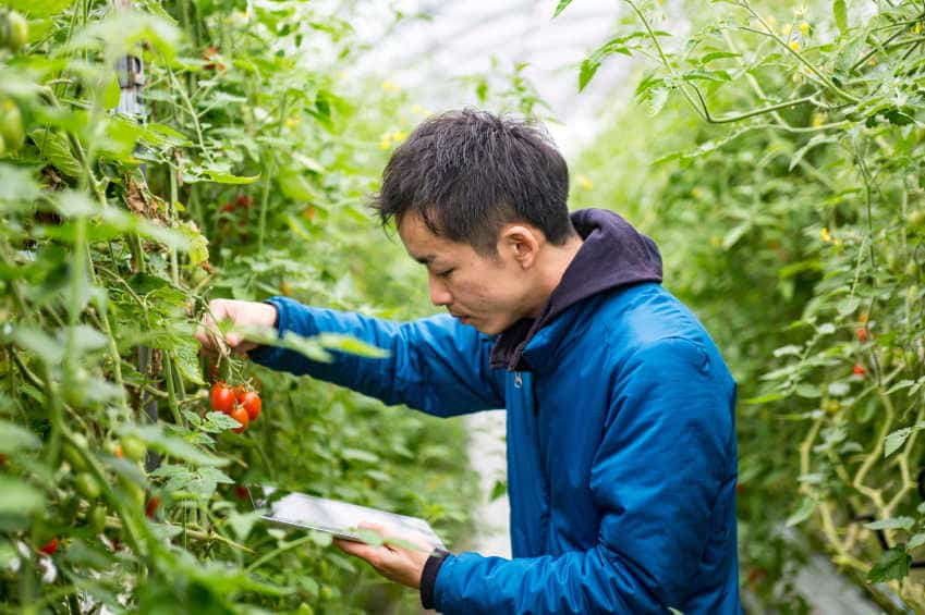 farmer-greenhouse-tomato-pesticide-organic