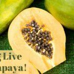 Long Live the Papaya_0.jpg