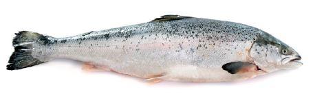 healthy fats fish