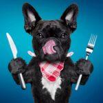 dog-with-utensils.jpg