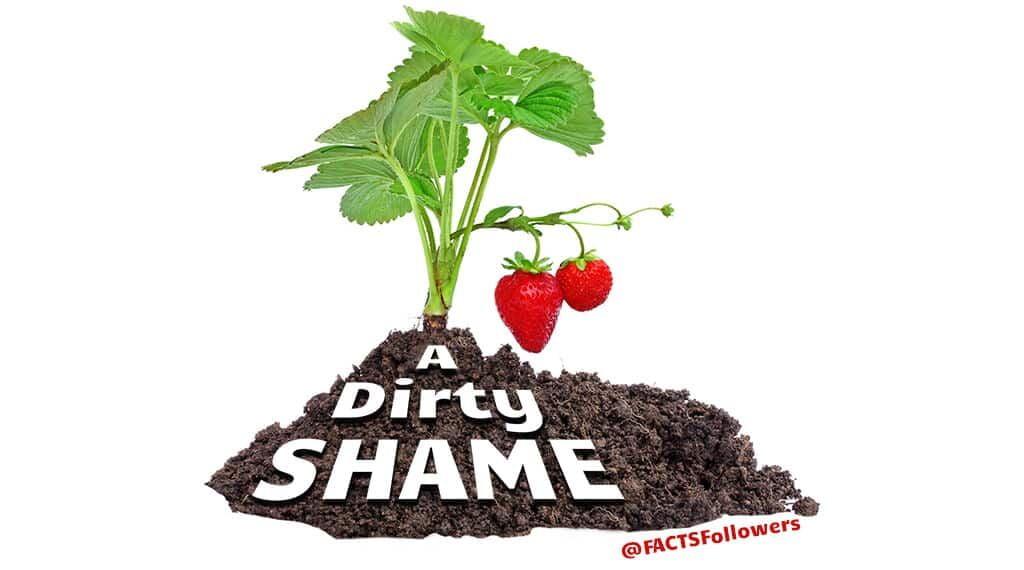 strawberries-in-dirt.jpg