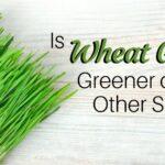 Wheat grass greener.jpg