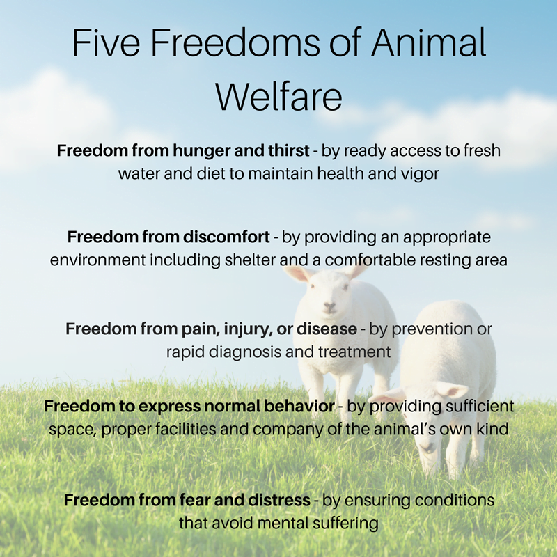 five freedoms of animal welfare
