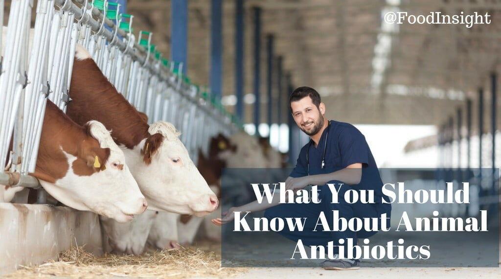 animal antibiotics: what you should know