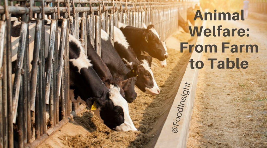 Animal Welfare Page_1.jpg