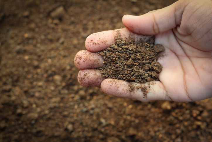 healthy soil in a farmer's hand