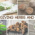 Thanksgiving Herbs and Spices_0.jpg