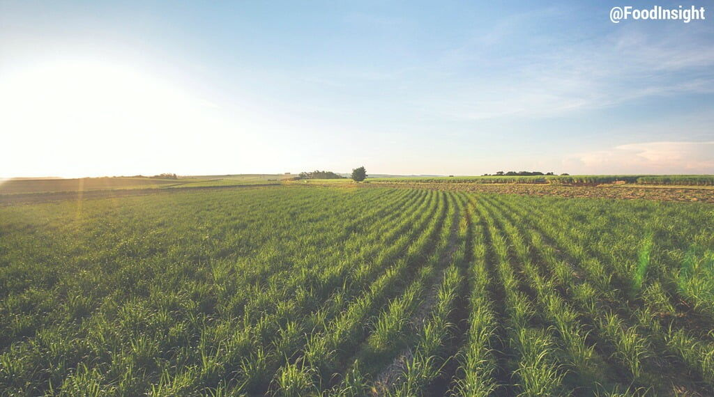 farming field.jpg