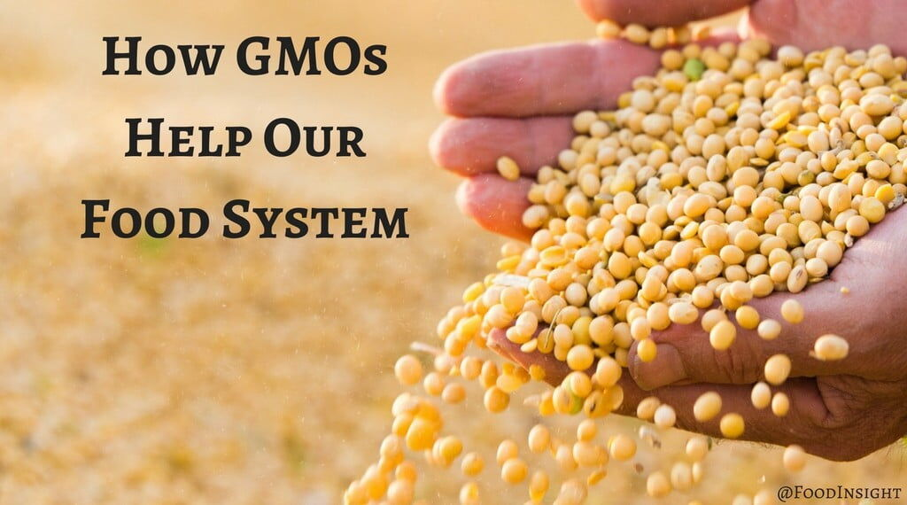 How GMOs Help Our Food Supply & Environment (1)optimized.jpg