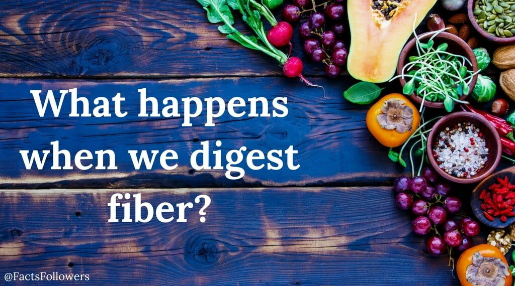How does our body digest fiber__opt.jpg