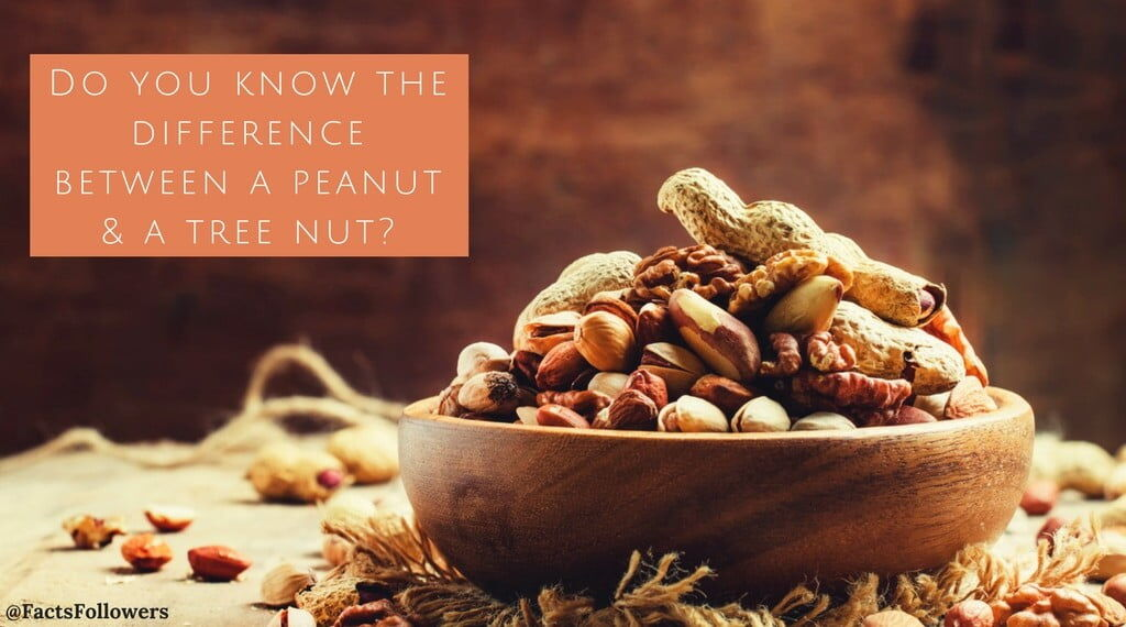 Do you know the differencebetween a peanut & a tree nut_ (1)_0.jpg