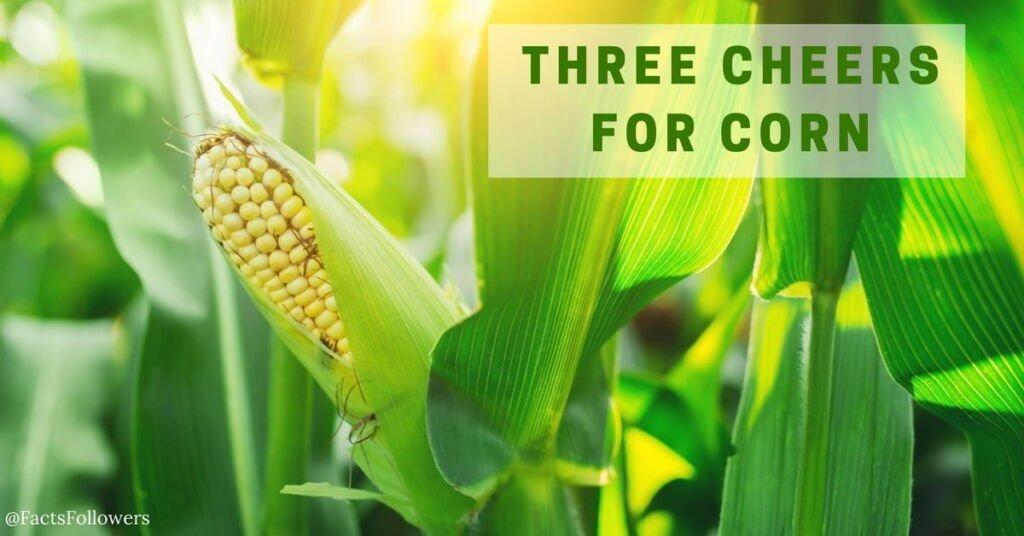 GE corn_0.jpg