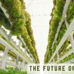 vert farming_0.jpg