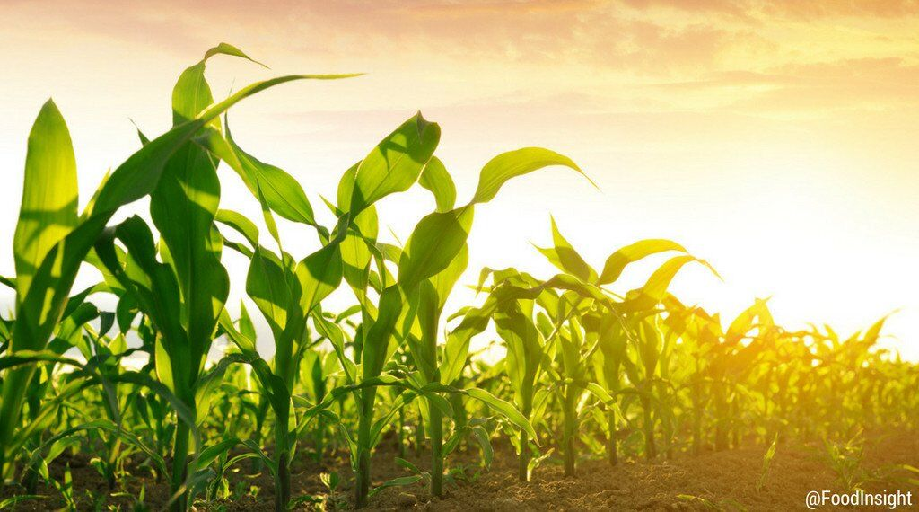 GMO research_0.jpg